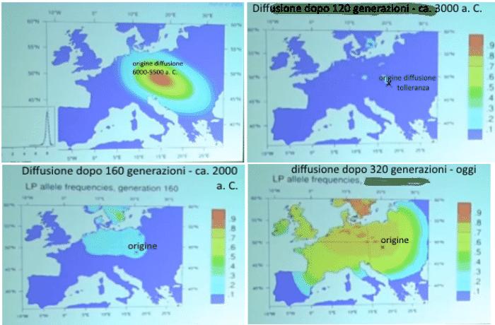 Diffusione-tolleranza-al-lattosio-nel neolitico-700