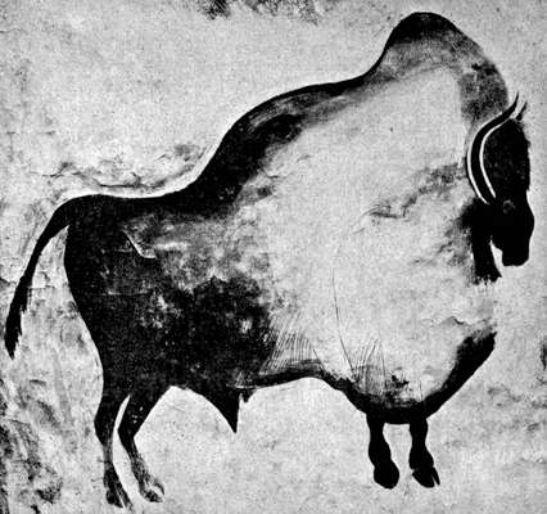 Bisonte, grotta Font de Gaume, 150 cm x 125 cm, Magdaleniano. Les Eyzies-de-Tayac-Sireuil, Département Dordogne. Foto and text: Capitan et Breuil 1903