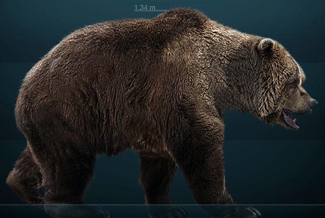 I cacciatori di orsi del paleolitico balver h hle for Piani di caverna dell uomo