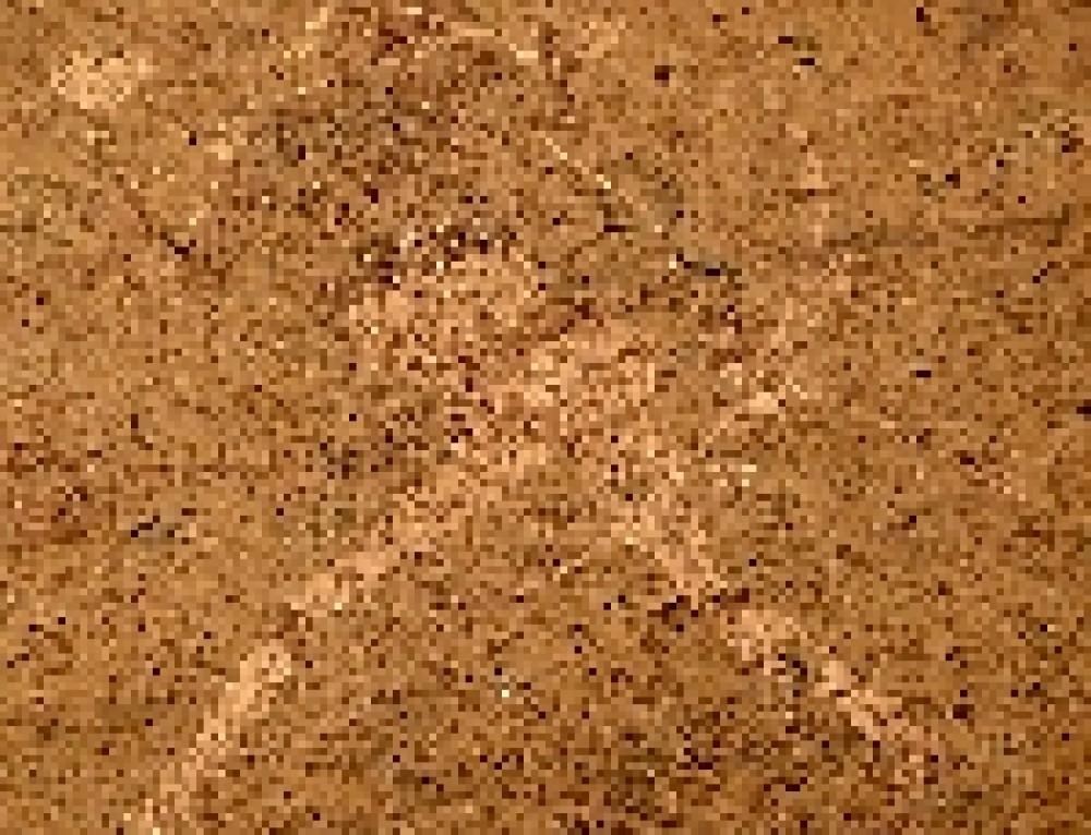 La Dama bianca del Brandberg. Pitture rupestri preistoriche in Namibia