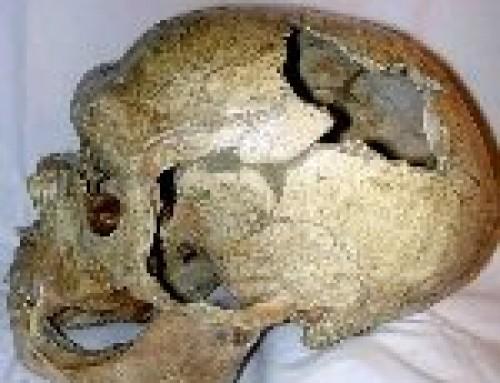 Il culto dei crani nel Paleolitico