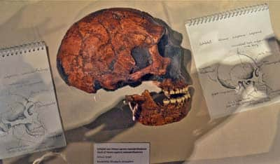 400-neanderthal-Mettmann--amud-cranio-DSC_2392