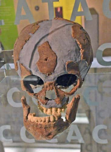 500-n-LagarVelho-cranio-mettmann-DSC_2406