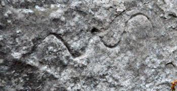 Incisione di serpente sulla pietra più grande di Hollstein. Il serpente è un simbolo tipico della divinità femminile arcaica.
