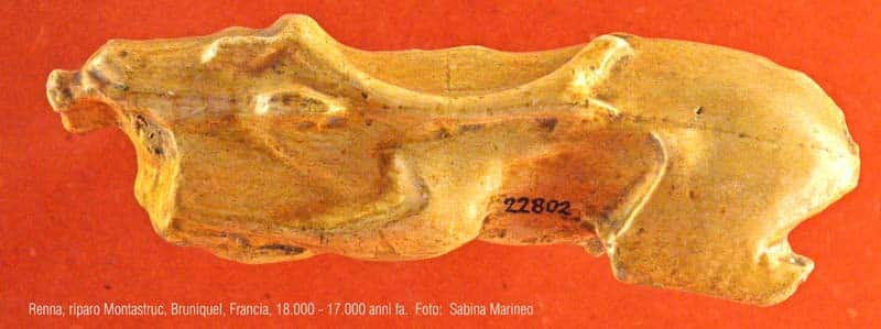 renna, Riparo Montastruc, Bruniquel, Francia. 18.000 - 17.000 anni fa. foto - sabina marineo