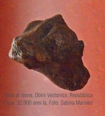 testina di leone, Dolni Vestonice, Repubblica Ceca. 32.000 anni fa. foto - sabina marineo