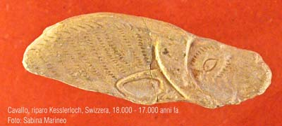 cavallo, Riparo Kesslerloch, Swizzera. 18.000 - 17.000 anni fa. foto - sabina marineo