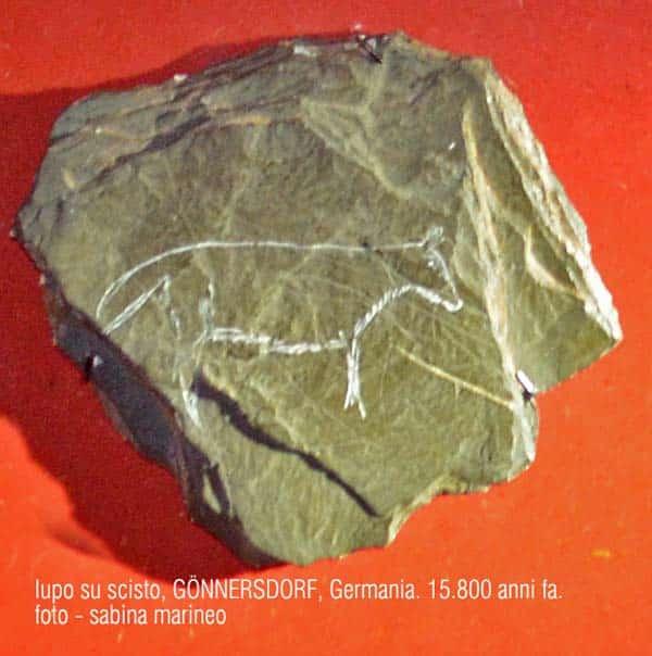lupo su scisto, Gönnersdorf, Germania. 15.800 anni fa. foto - sabina marineo
