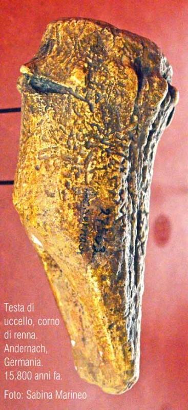 testa di uccello, corno di renna. Andernach, Germania, 15.800 anni fa. foto - sabina marineo