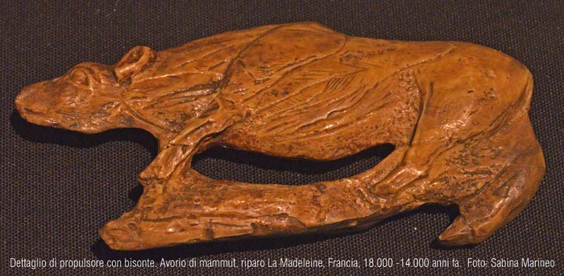 dettaglio di propulsore con bisonte, Riparo La Madeleine, Francia. 18.000 - 14.000 anni fa. foto - sabina marineo