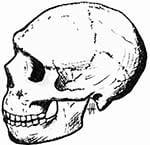Neanderthal della Grotta di Amud vissero insieme agli antenati dei primi europei in Israele.