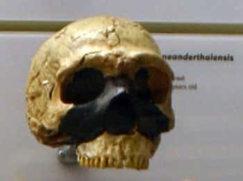 Cranio della Grotta di Amud 1. I Neanderthal di Amud vissero insieme ai Sapiens 40.000-50.000 anni fa. Foto - Ryan Somma - CC-BY-SA-2.0