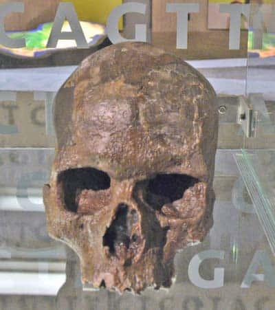 Il cranio di Manot presenta somiglianze evidenti con quelli degli africani di oggi e dei primi moderni europei, come ada esempio con il cranio di Mladec 1