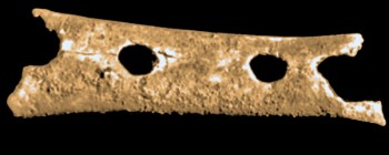 Il flauto di Neanderthal trovato a Divje Babe è lo strumento piú antico del mondo - foto Thilo Parg CC-BY-SA 3.0