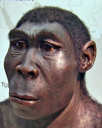 l'Homo erectus scoprì e imparò a controllare il fuoco. Ricostruzione di Homo erectus. Museo Regionale della Vestfalia a Herne. Foto Rafaelam