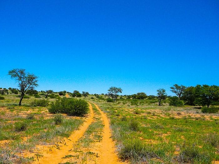 Su una pista solitaria del Kalahari durante il periodo delle piogge. In questo tempo il semideserto cambia faccia e diventa verde. Foto: Sabina Marineo