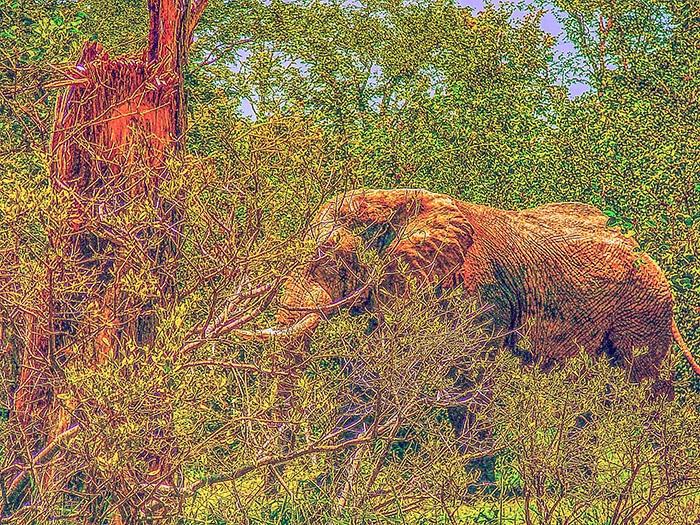 Il bush africano nella Valle del Luangwa. Copyright Sabina Marineo