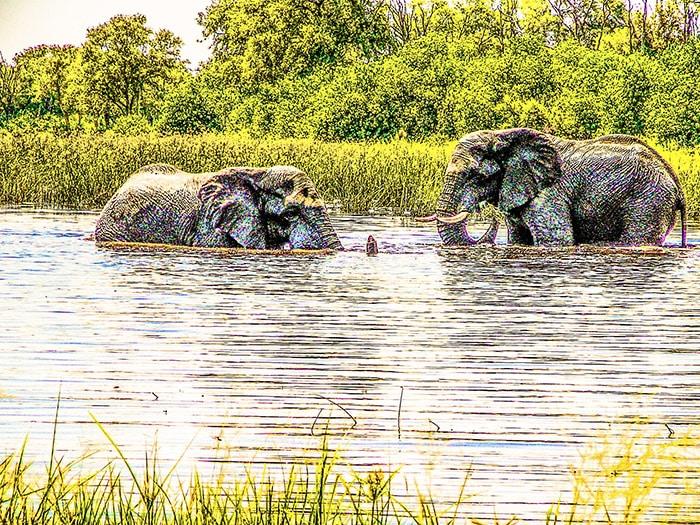 Degli elefanti fanno il bagno nel Luangwa. Copyright Sabina