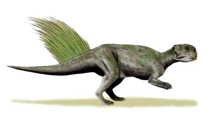 Ricostruzione di psittacosaurus mongoliensis. Disegno: Nobu Tamura CC BY 3.0