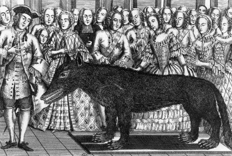 Illustrazione d'epoca. Il cacciatore Francois Antoine presenta la bestia uccisa alla corte di re Luigi XV