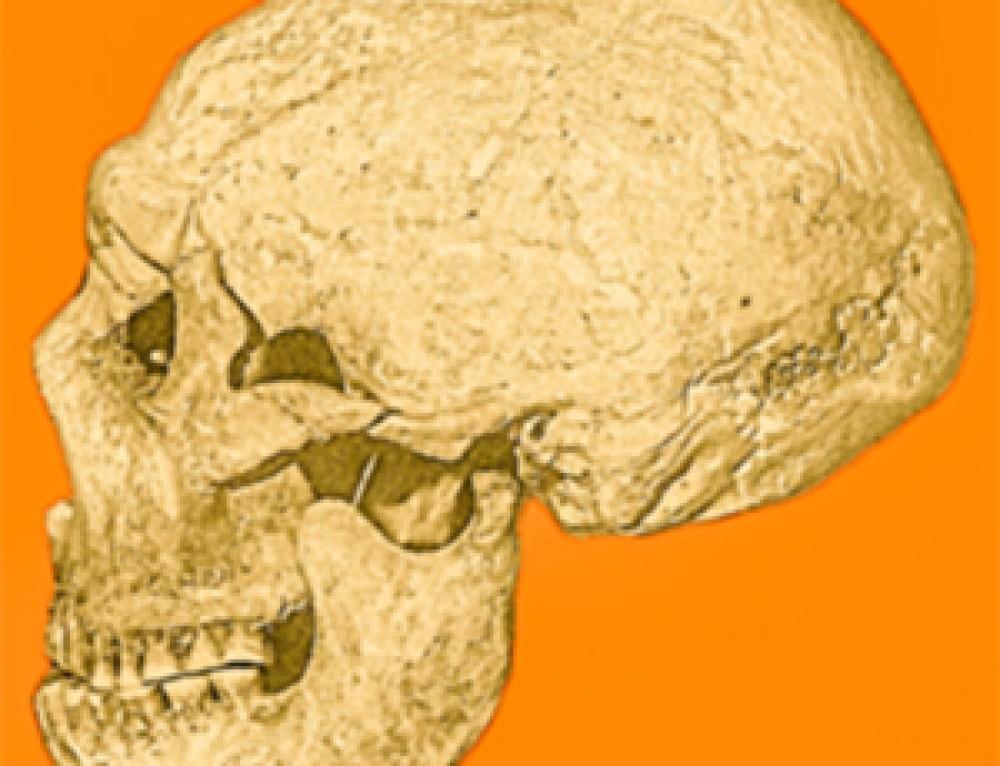Quel proiettile che uccise un Neanderthal 50000 anni fa