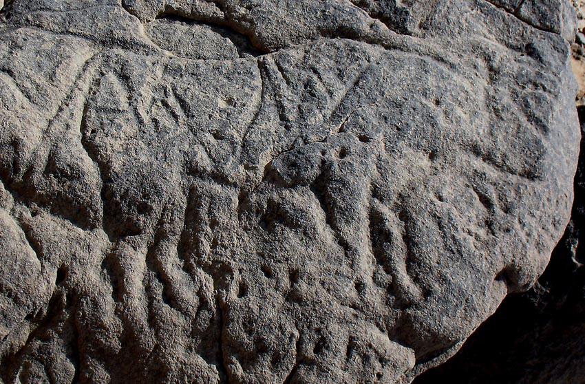 Petroglifo di Wadi Abu Subeira. Un ottimo esempio che illustra anche le incisioni di Qurta. Il medesimo stile, le stesse caratteristiche evidenziate dalla posizione delle zampe dell'animale. Foto: Per Storemyr/www.per-storemyr.net. Link al suo articolo