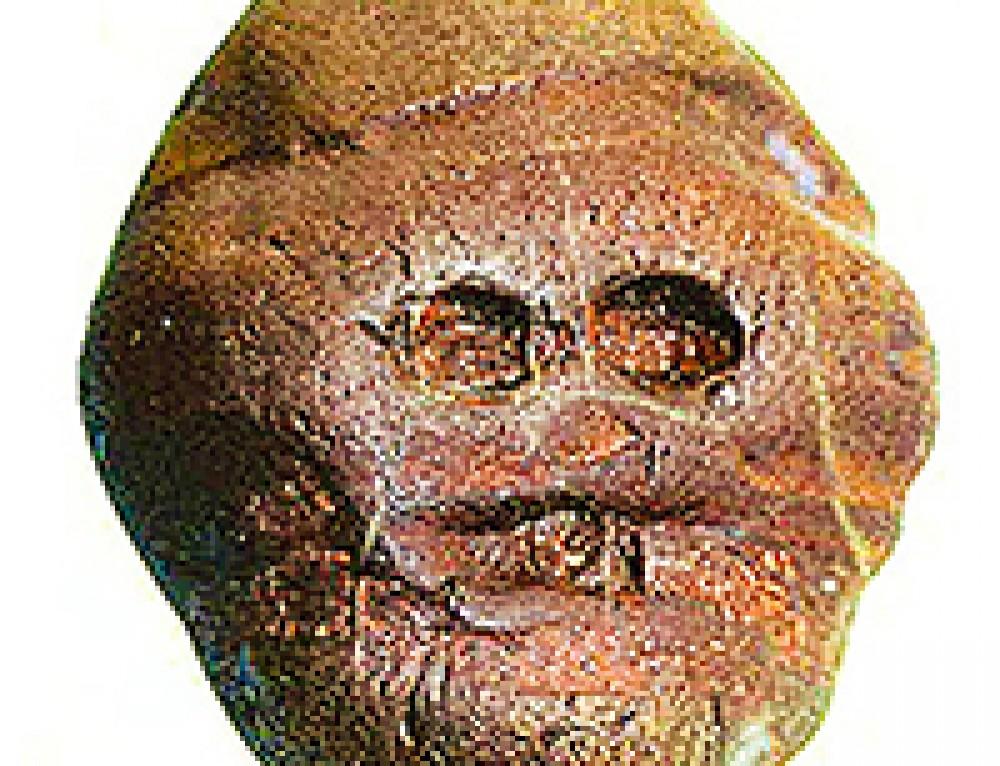 Le sculture più antiche? Pietre dello scandalo e del mistero