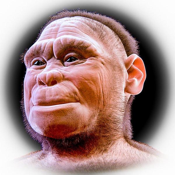 Ricostruzione dell'Uomo di Flores, il piccolo ominide scoperto in Indonesia che ha rivoluzionato, così come diverse altre scoperte recenti, il quadro della preistoria. Copyright Cicero Moraes CC BY 4.0