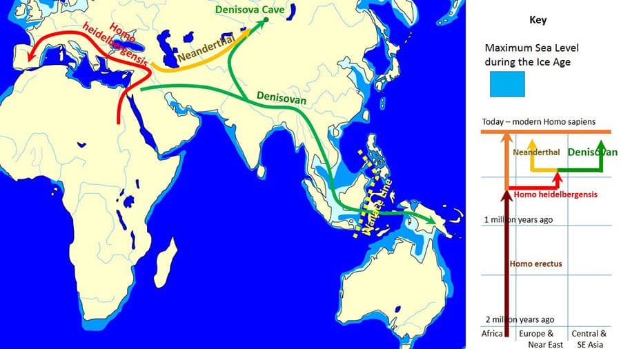 Diffusione ed evoluzione della specie Homo. Copyright John Croft CC-BY-SA 3.0