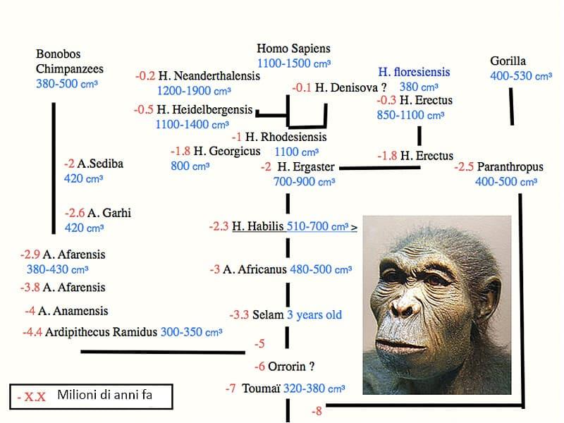 Evoluzione del cervello umano. ©P'tit-Pierre-CC-BY-SA-3.0