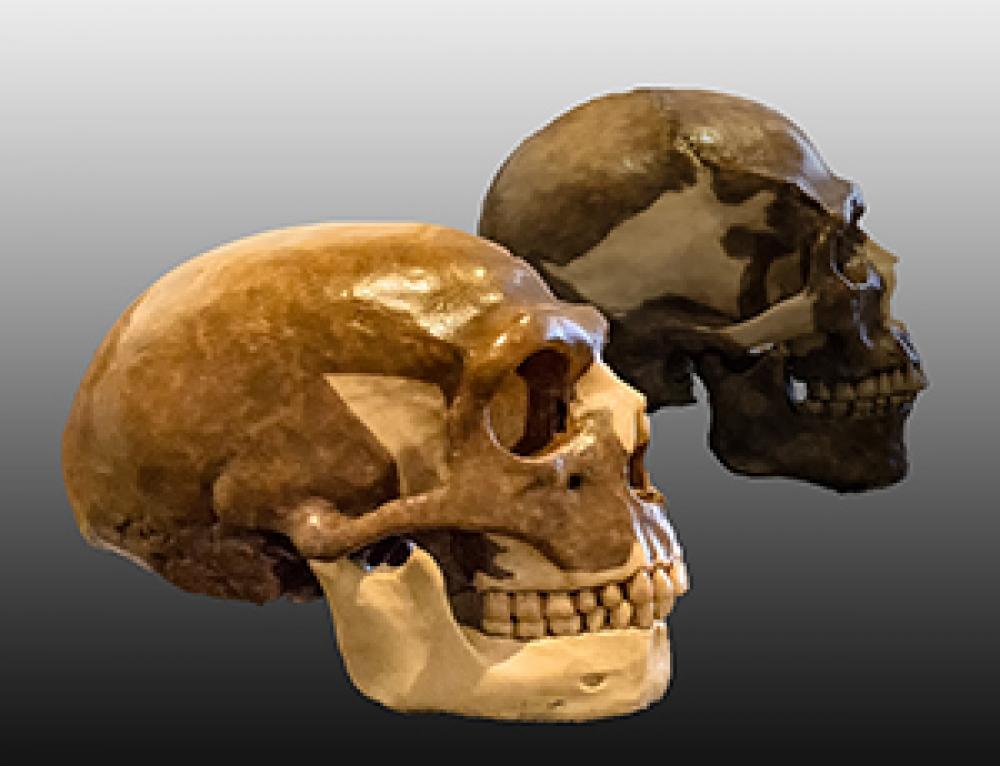 Evoluzione del cervello umano. Fuoco, parola, sangue.