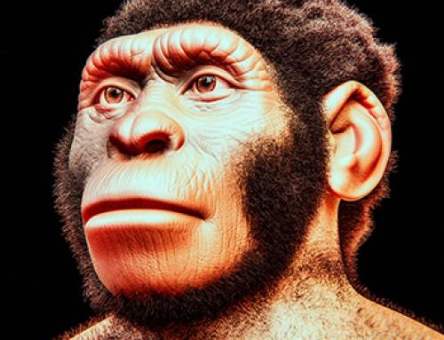 Homo naledi. L'uomo delle stelle e la nuova datazione